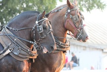 Draft Horses / by Dianna Campbell