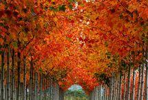 Nature's Beauty / by Nancy Vanderpool