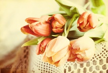 flowery stuff / by Savina Nikolova