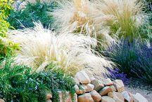 Gardening & Outdoor Spaces / My favorite ideas for gardening, landscaping and outdoor living spaces.  / by Nicole Fernandez