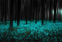 My favorite color ever...teal :) / by Emily Pullin