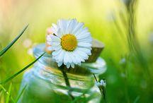 Breath of Spring / by Roberta Rainwater