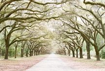 Road Trip...Savannah, Georgia / by Kimberly Pruskiewicz