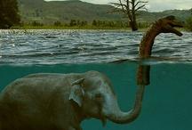 E is for Elephants / by Monica Napier
