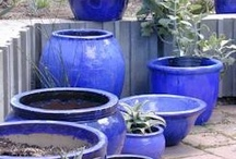 what to grow on my patio / by adriana parry