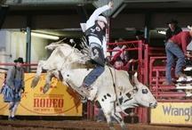 Rodeo / by Debra Schwarz Chance