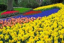 Keukenhof Garden ,Nethersland / by たま☆