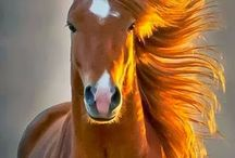 horses / by Zezita Luz