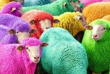 Sheep / by Fifty Four Ten Studio