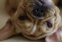 Puppy / by Sam