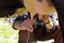 Life on the Farm / by Jami Myatt