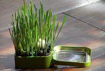 gardening is my thing / by Sarah Kautz