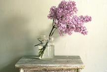 Flowers / by Kate Nyland-Hoke