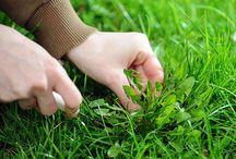 Lawn care / by Robin Iler