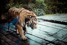 Animals / by Tom Edwards