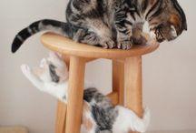 cats / by Emmanuelle Anfreville