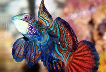 Fishes / by Savannah Perez