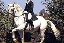 I Love Horses II / by Sally Ebeling