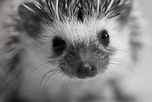 Animals / by Vanny Meneghim