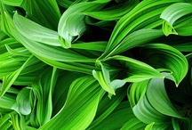 Green Moods / Green is the color of nature. It symbolizes growth, harmony, freshness, and fertility. Green has strong emotional correspondence with safety. Dark green is also commonly associated with money. Herein lies a connection to things green. / by Nick Chill Photography