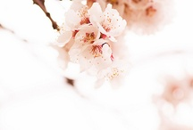 flowers / by Emma Lumpkin