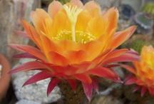 Cactus & Succlents  / by Debbie Scialpa