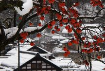 Winter in Japan / by AllAboutJapan