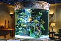 Aquariums / by Tami Buckingham
