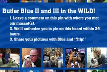 Butler Blue II & III in the Wild / Have you been lucky enough to have your picture taken with or have taken a photo of Butler Blue II and III while on campus, or around town? Feel free to share them with us! To pin here, leave a comment with where you found our beloved mascot(s) on the first Blue pin. (Pics of the Blue Mobile are welcome too!) / by Butler University