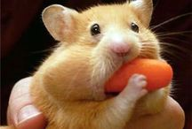 Adorable Animal Photos / Cute Critters = Instant Smile!  Here are some pictures to brighten your day. / by Today's Warm 106.9