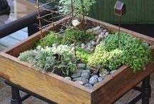 Indoor/Outdoor Garden / by Jacqueline Lapham