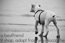 Dogs / by Kristen Shelton