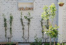 garden bliss / by Aleah and Nick | Valley & Co.