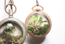 Terrariums / by DanielleSherri Baker