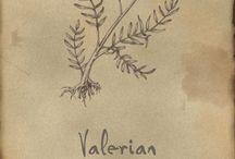 Outlander Herbs / by Braizyn
