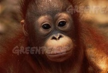 #Borneo / by Greenpeace Australia Pacific