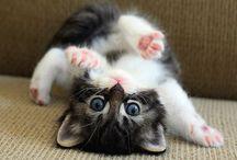 cute things / by Arlene Rohrbacker
