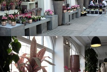 ~ Floral Studio Ideas ~ / by Rose of Sharon Floral Designs, Althea Wiles