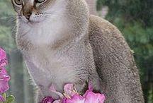 Cats / by Linda Martins