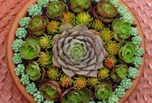Plants / by Hilda C