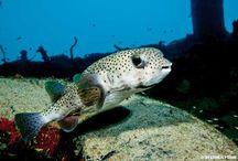 Hazardous Marine Life / by Divers Alert Network