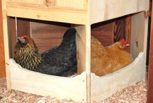 Chicken coop dreams / by Mary Traffas-House