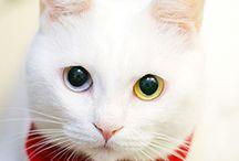 Cats/gatti / by Ambra Muto