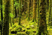 IRELAND :) / by Lauren Wismer