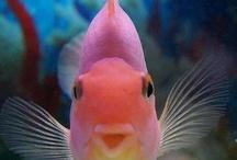 Fish / by Brenda Ison