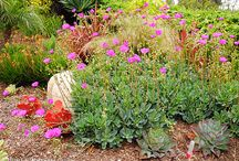 Drought Tolerant Lanscaping / by Jody V