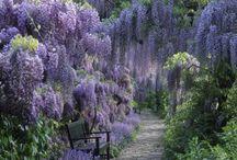 Flowers, plants & trees / by Jennifer Dickey