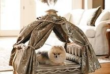 After diamonds, puffy pups are a girls bff / by Stephani Chandler