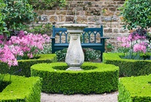 Garden / by Caroline Ricci
