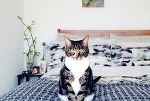 Cats / by Jacqueline Janssen